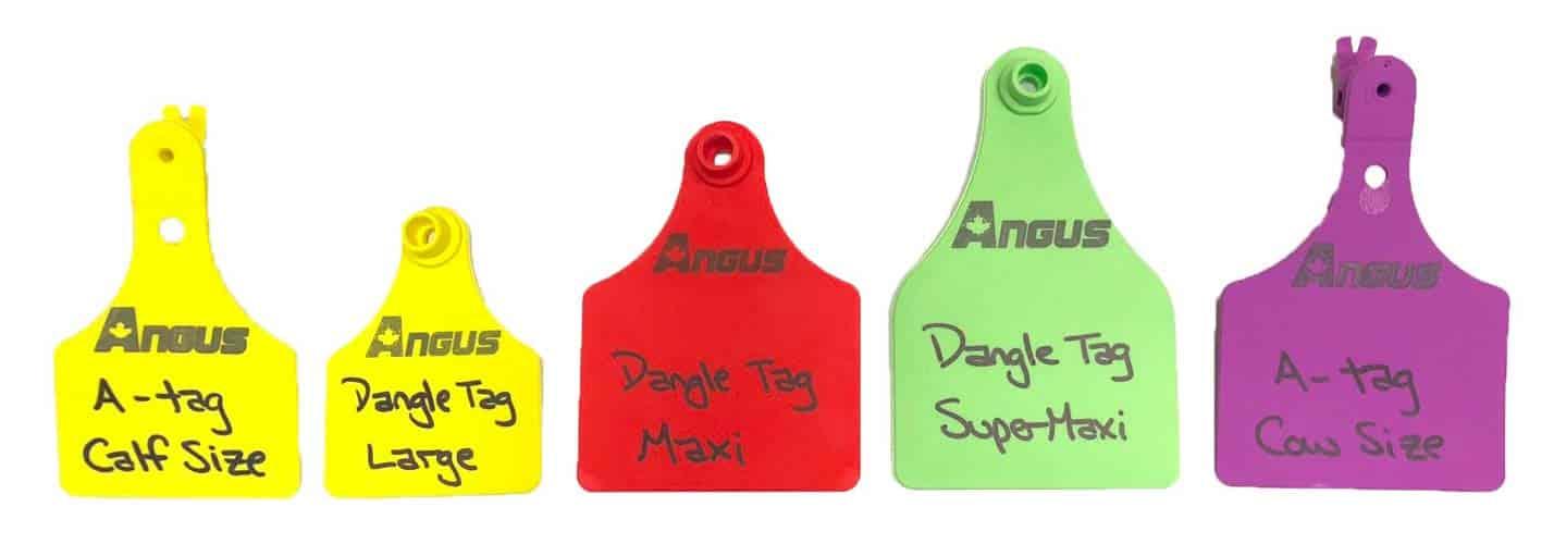 A-Tag-sizes-vs.-Dangle-Tag-sizes