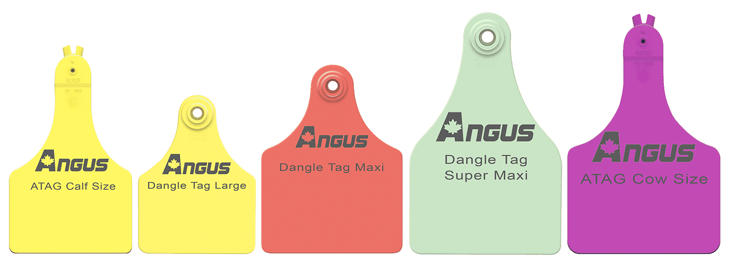 CA Angus Tag Colour Style Options