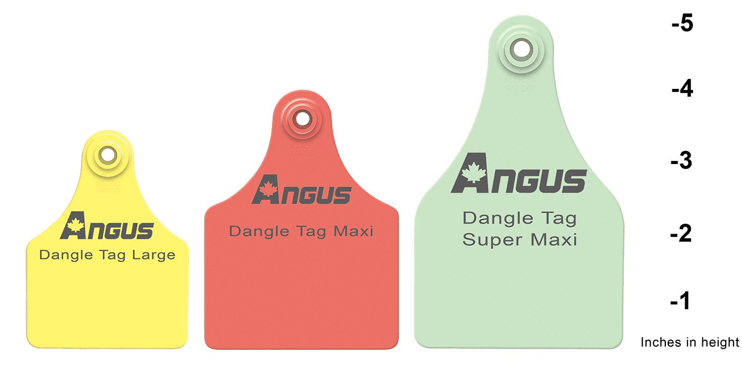 Dangle Tag Sizes