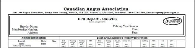 Calf report