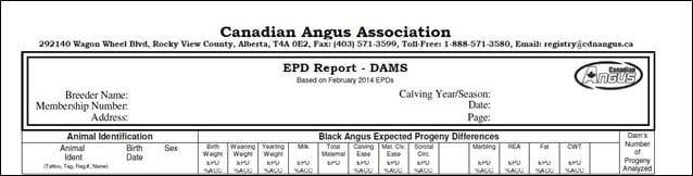 Dam report