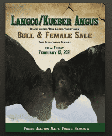 LangcoKueber Angus Bull Sale by The Big Picture of Design Inc. - issuu