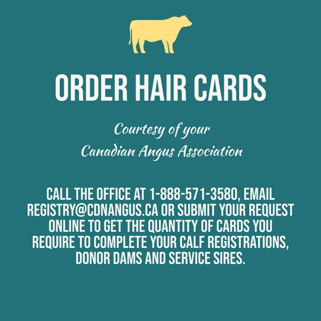 Order Hair Cards 2
